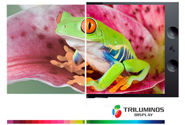 TRILUMINOS Display - Android Tivi OLED Sony 4K 55 inch KD-55A9F